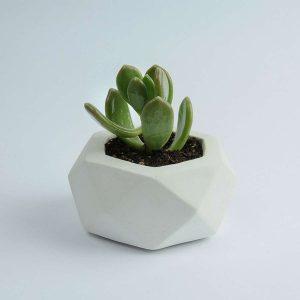 Beton Saksı Beyaz Renk 10x6 cm